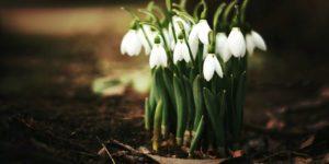 Frühlingszeit